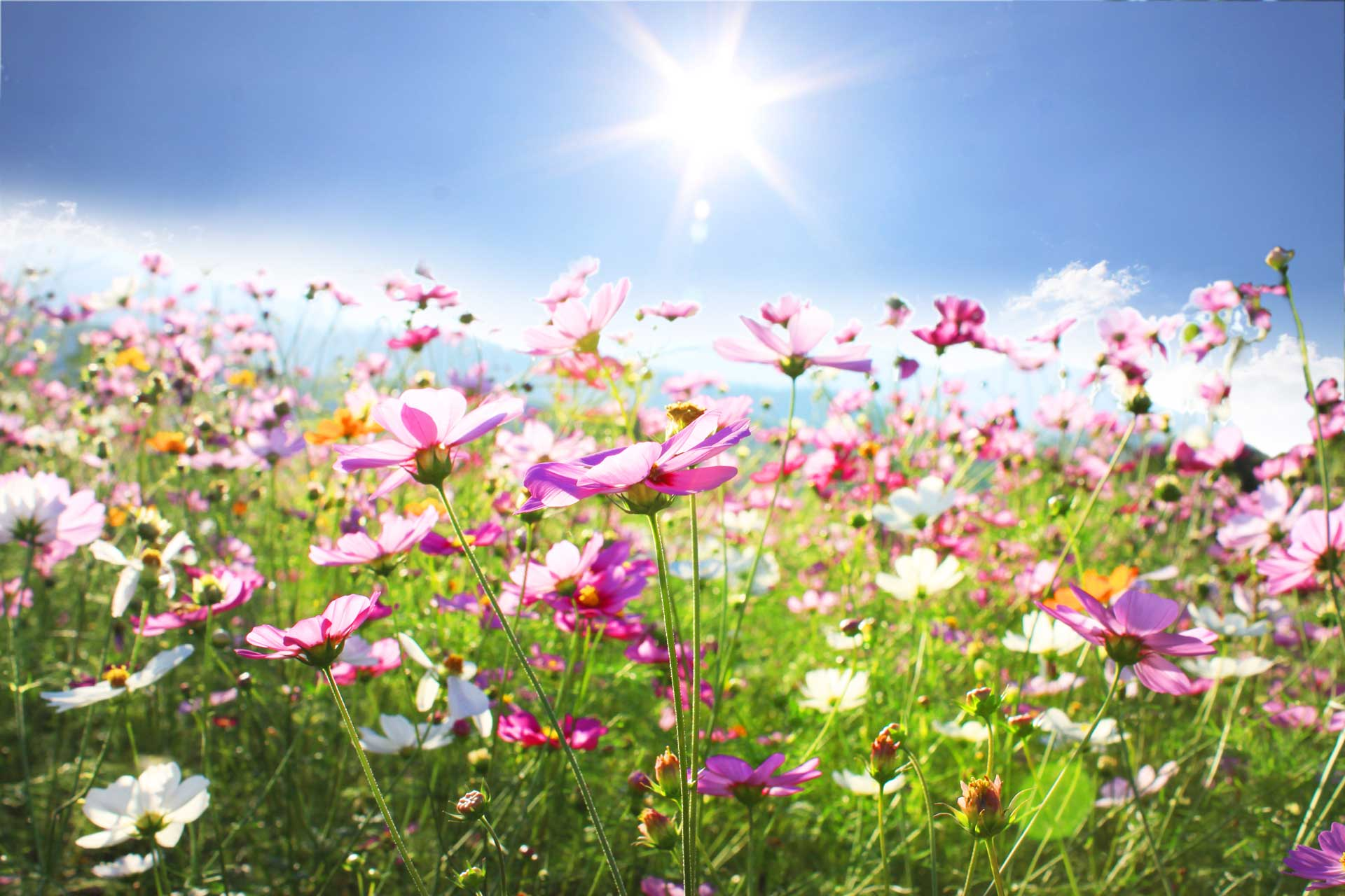 campo-fiorito.jpg (1920×1280)
