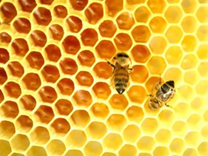 Ape miele